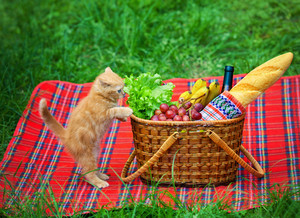 Kitten climbs in a picnic basket