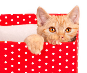 Kitten hiding in a box with polka dots