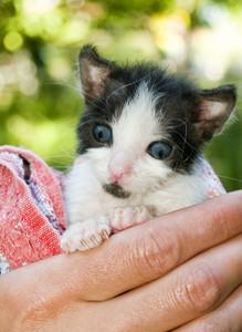 Kitten Looking Around The New World