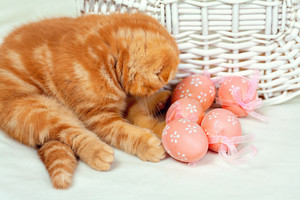 Kitten playing with easter eggs