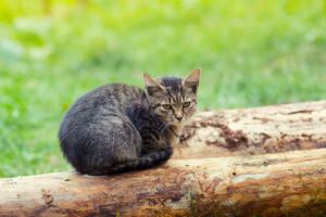 Kitten sitting on a snag