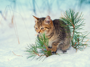 Kitten sitting on the snow in the forest
