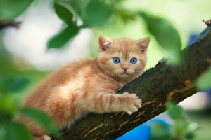 Kitten sneaking on the tree
