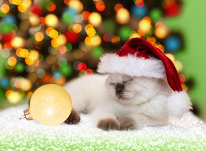 Kitten wearing a Santa hat sleeping on the background of Christmas lights