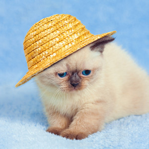 Kitten wearing a straw hat