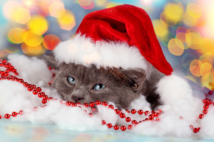 Kitten wearing Santa hat on Christmas background
