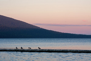 Lake Birds At Twilight