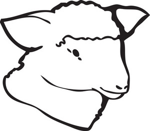 Lamb Vector Element
