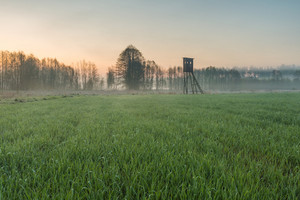 Landscape of field with raised hide and forest photographed at sunrise. Beautiful polish countryside