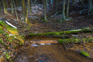 Landscape of late autumnal forest with small stream. Beautiful virgin forest with first snow in Poland.