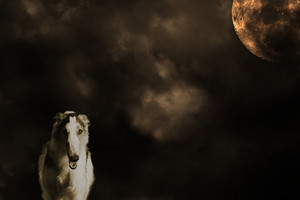 large borzoi hound and full moon