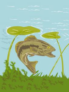 Largemouth Bass Fish Underwater