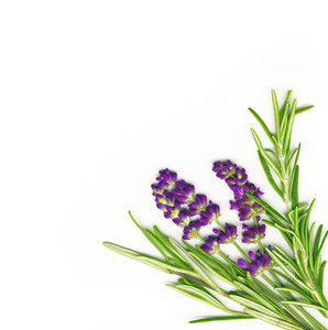 Lavender And Rosemary Isolated On White