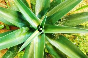 Leaf Texture 13