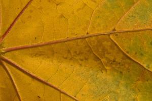 Leaf Texture 23