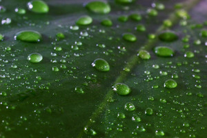 Leaf Texture 24