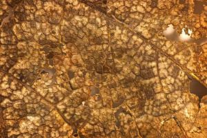 Leaf Texture 25