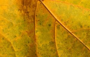 Leaf Texture 28
