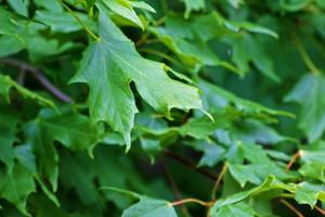 Leaf Texture 29