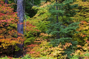 Leaf Texture 30
