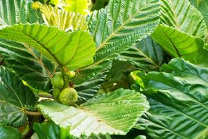 Leaf Texture 32