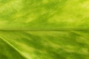 Leaf Texture 34