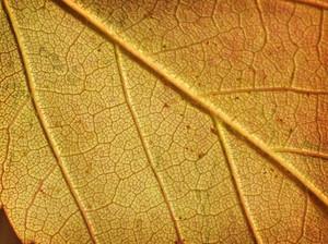 Leaf Texture 35