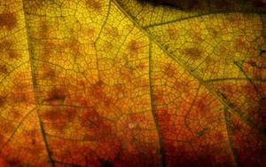 Leaf Texture 38