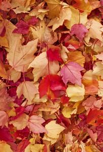 Leaf Texture 39