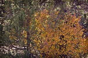 Leaf Texture 42