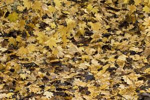 Leaf Texture 49