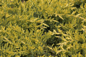 Leaf Texture 4