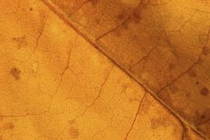 Leaf Texture 59