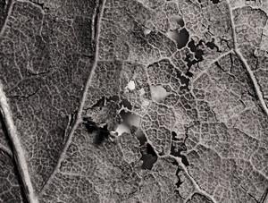 Leaf Texture 60