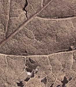 Leaf Texture 61