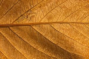 Leaf Texture 64