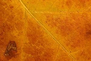 Leaf Texture 65