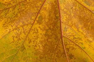 Leaf Texture 67