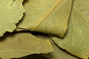 Leaf Texture 70
