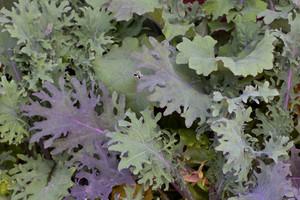 Leaf Texture 82