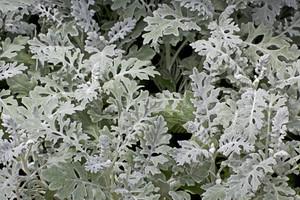 Leaf Texture 85
