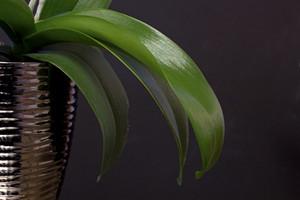 Leaf Texture 88