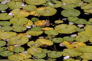 Leaf Texture 8
