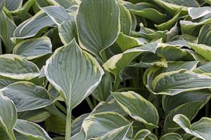 Leaf Texture 90
