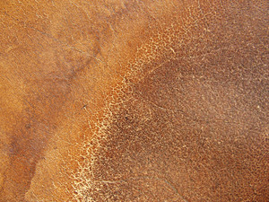 Leather 11 Texture
