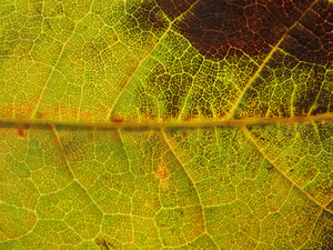 Leaves 10 Texture
