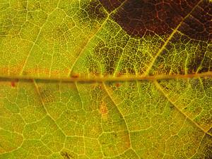 Leaves 10 Texture