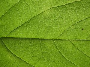 Leaves 2 Texture