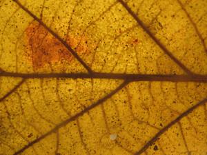 Leaves 23 Texture