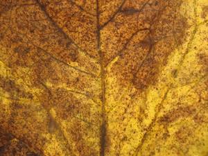 Leaves 24 Texture